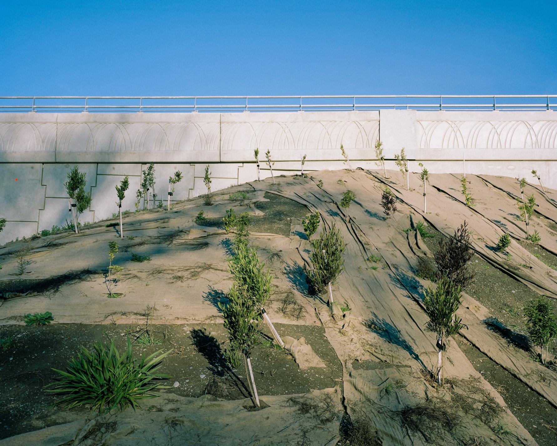 Transitional Landscapes