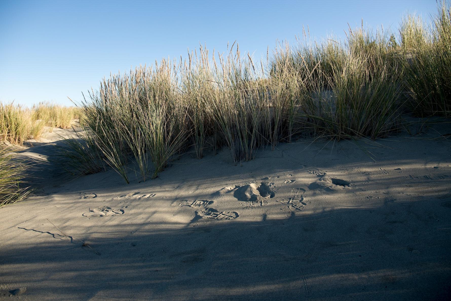 Pegasus Beach, Kaiapohia pā region.