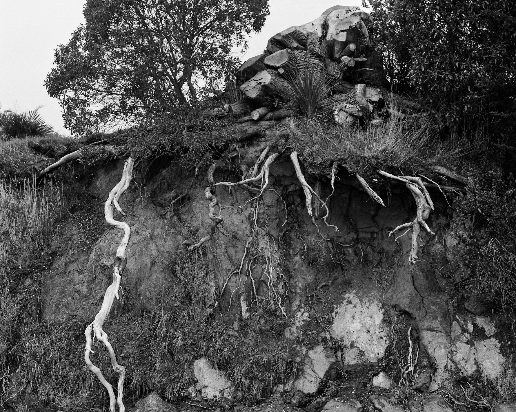 Roots over-hanging the cliff edge at Rāpaki beach.