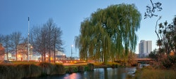 Napoleon's Weeping Willow. Towards ChristChurch Cathedral and the site of the new Christchurch Convention Centre. From the West bank of the Ōtākaro, Avon River.