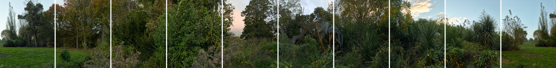 River Road, 2018. Heritage garden after demolition. 360 degree panorama at dusk.
